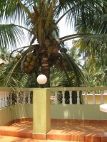 Holiday apartment for rent in Candolim — La Rosalia Apartments | 1821  La Rosalia Apartments (#1821)  North Goa, Candolim - Apartment