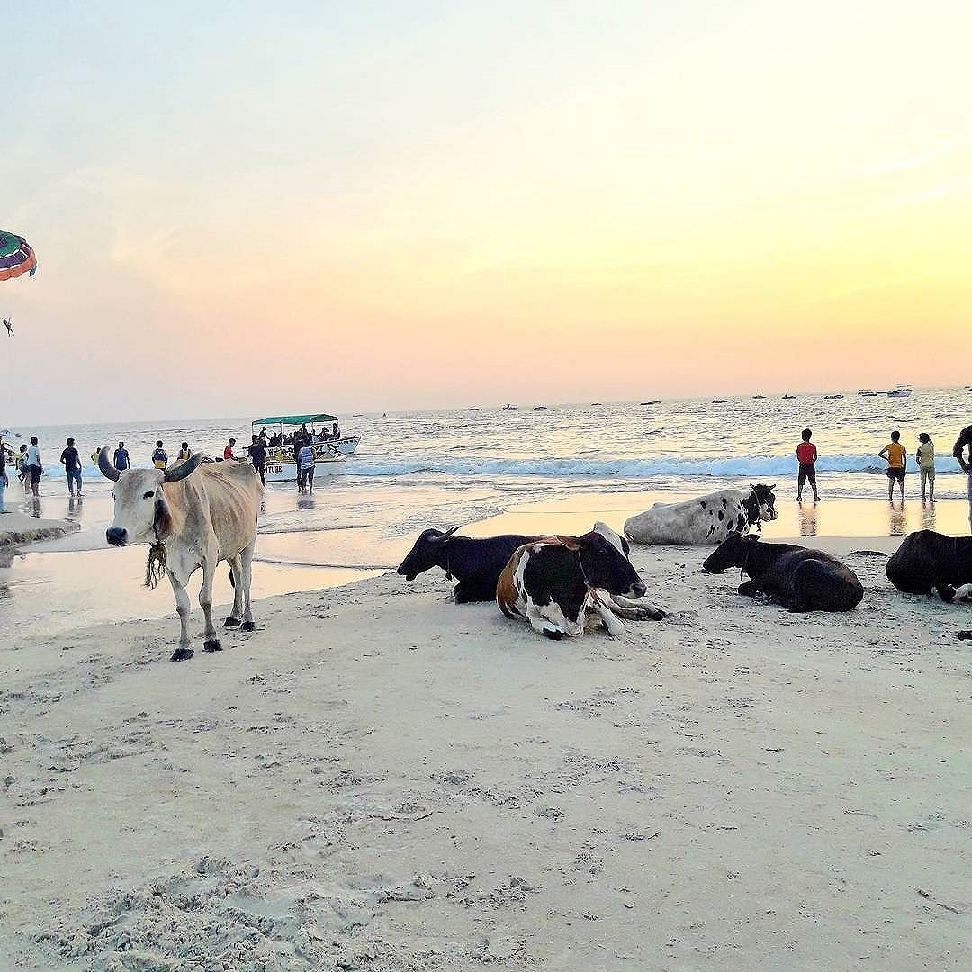 Goa in December 2019 — Top 7 Things To Do In Goa In December