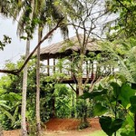 @instagram: Our new yoga pavilion with an endless view of the paddy fields at Frangipani House, Siolim Goa. #the_rose_nomad #frangipanisiolim #yoga #goavillas #boutiquehomes #yogapavilion #goalife #siolim