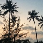 @instagram: Soooo, who loves palmtrees? ~ ???????? #mandrem, India