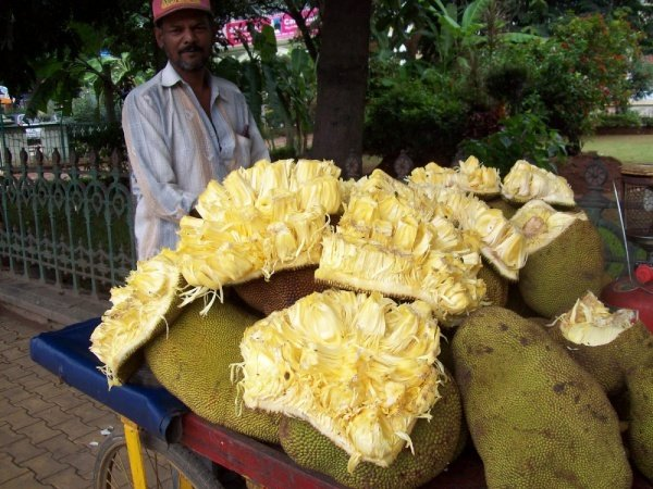 Jackfruit fruit in Goa